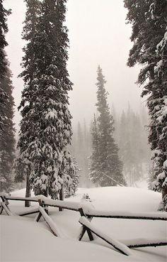 Winter Haze by Larry Kniskern - - This hazy winter scene was captured while snowshoeing near Jones Pass in the Colorado Rocky Mountains. Winter Szenen, Winter Love, Winter Magic, Winter Season, Yosemite Winter, Winter Photography, Landscape Photography, Nature Photography, Travel Photography