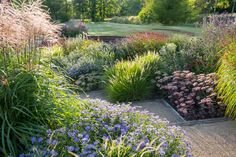 Manor Garden - Sue Townsend Garden Design