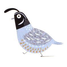 C_pym_quail Quails. Loving quails.
