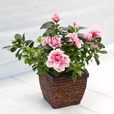 Flowers in cute container