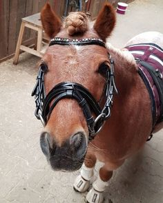 All The Pretty Horses, Beautiful Horses, Cute Baby Horses, Kids Saddle, Cute Horse Pictures, Shetland, Mini Pony, Reining Horses, Cute Ponies