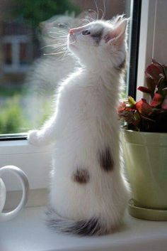 Whiskers and tails and thousands of frails lion like nose with an angelesque pose silky pattern'd fur o'er heart touching purr.       Terri Guillemets