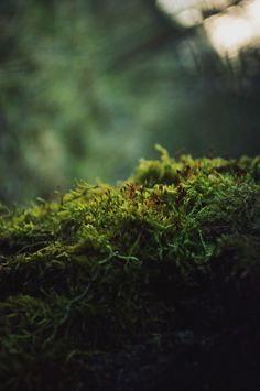 #green #moss #groundcover