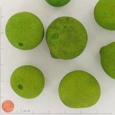 Bellani Pod Balls Lime Green (6 balls/pkg) $2.99 pkg/ 4 pkgs $1.99 pkg