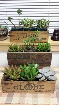 Vintage Cheese Box Succulent Planters :: Hometalk