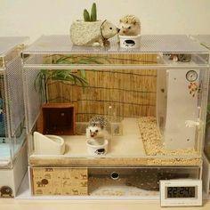 hedgehog cage More Hedgehog Habitat, Hedgehog Care, Hedgehog House, Baby Hedgehog, Pygmy Hedgehog Cage, Hamster Habitat, Hamsters, Hamster Cages, Pets