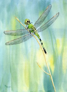 I painted this green dragonfly that dropped by just once. The giclee print is printed on Arches Watercolor paper with long lasting inks, will be backed with matboard and enclosed in a Clearbag.