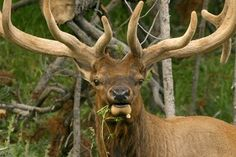 The Best Rifle Calibers for Hunting Elk thumbnail