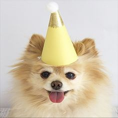 Let's pawty! Adorable party gear and artisan dog treats from Bobby & Bambi's Dog Bakery