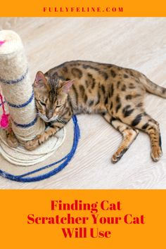 Cat Scratcher Search: Finding One Your Cat Will Use - Fully Feline Cat Scratcher, Cat Wall, Inspiration Wall, Cat Tree, Cat Activity, Cat Behavior, Nirvana, Cats, Funny