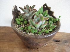 おうち植木鉢と多肉植物 - ちくちくつくる ー手作りいろいろー