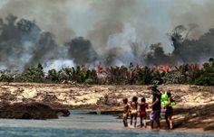 Mi blog de noticias: 450 presas amenazan a un tercio de los peces de rí...