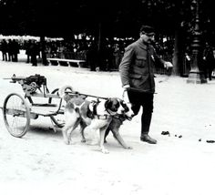 A dog team drawing a machine gun is lead by a French solider along a Parisian street in Dogs With Jobs, Military Working Dogs, Service Dogs, Wwi, Mans Best Friend, Husky, Dog Cat, History, Cats