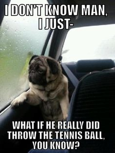 Introspective Pug... life is sometimes so troublesome.
