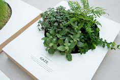 TAKE A GREEN BREAK: Poster by Sok Hwee, via Behance