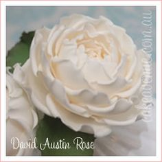 Gumpaste David Austin rose.  Beautiful and creamy.   I can almost smell the aroma.