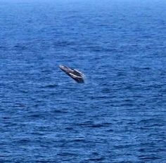 Humpback whale, Isabela PR