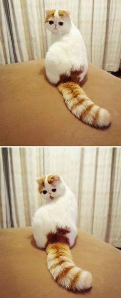 Weird but in a cute way!
