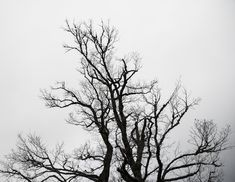 Abstract Tree Photography Black & White - Miguel Sanchez Black And White Tree, Tree Photography, Beautiful Pictures, Artwork, Abstract Trees, Abstract Photography, Fine Art, Impressionism, Artworks