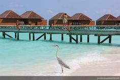 maldives, veligandu | Project Oneworld projectoneworld.com