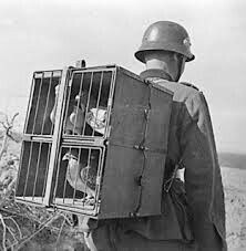 Pigeons were the mobil phone's of the war.