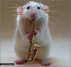 http://www.kulturologia.ru/files/oleczka/Rats/rats_music16.jpg