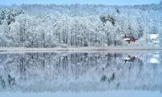 *🇱🇹 Snowy winter reflections (Lithuania) by RE~gi~NA / ❄️ Reflection Photography, Amazing Photography, White Magic, Light Reflection, Unique Image, Abstract Images, Winter Landscape, Great Shots, Great Memories