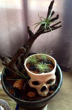 air plants and a ceramic skull planter. Air Plants, Indoor Plants, Kitsch, Skull Planter, Gothic Garden, Skull Decor, Gothic House, Cactus Y Suculentas, Decoration Design