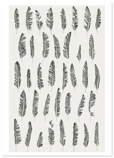 Feather prints
