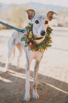 Joshua Tree Wedding. Dog floral collar by Hello Gem. Photo by Fondly Forever Photography.