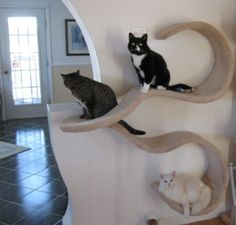 Amazing curved wall cat shelf activity I've just ordered from Etsy