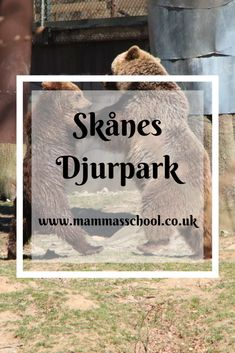 Visit Skånes djurpark and meet Sweden's wild residents as well as other nordic animals. With so much to see & do it is well worth a visit Musk Ox, Over The Bridge, Tree Tops, Farm Yard, Water Slides, Archipelago, Great View, Beautiful Creatures, Wildlife
