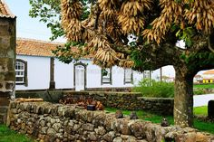 Traditional rural house with maize on a tree in São Brás. Terceira, Azores islands, Portugal