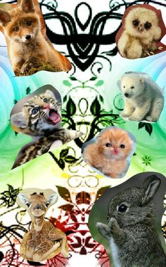 Adorable little baby animals