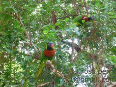 Singapore Vacation, Vacation Trips, Island, Bird, Animals, Animales, Animaux, Birds, Islands
