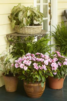 Group colorful potted plants together for an eye-catching look. Plus, they're easier to water if they're all together! From: Create an Enchanting Entry | Costa Farms Outdoor Flowers, Green Garden, Outdoor Dining, Front Porch, Grape Vines, Container Gardening, Floral Wreath, Planters, Yard