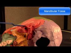 Human Cranial Osteology: Part IV, The Temporal Bone - YouTube
