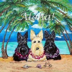 Scottish Terrier Aloha!