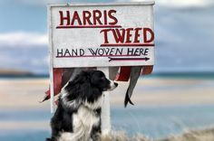 Harris Tweed exhibition - Photographs by Ian Lawson in collaboration with the Harris Tweed Authority ...And if you own a Border collie, every other shed hair will be woven into the fabrics of your home. (ours is not over-keen on brushing!)