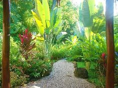 ideas about Small Tropical Gardens on Pinterest