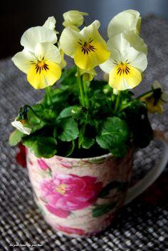 Spring is in the air! www.facebook.com/DerGruneDaumenTheGreenThumb