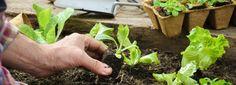 Orto autunnale: cosa piantare