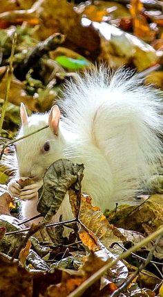 Beautiful Albino Squirrel