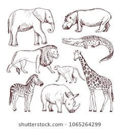 Different animals of savana and africa vector image on VectorStock Animal Line Drawings, Animal Sketches, Africa Drawing, Giraffe Drawing, Africa Art, Nature Drawing, Safari Animals, Wild Animals, Body Shapes