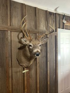 This gnarly Whitetail deer has mass, trash, and tons of character. Star) ID Whitetail Shoulder Mount Taxidermy for Sale Deer Shoulder Mount, Deer Head Decor, Taxidermy For Sale, Deer Mounts, Deer Skulls, White Tail, Deer Hunting, Outdoor Life, Horns