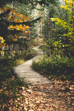 44 Ideas Wild Nature Landscape Pathways For 2019 Magic Places, Places To Go, Beautiful World, Beautiful Places, All Nature, Walk In The Woods, Pathways, The Great Outdoors, Wonders Of The World
