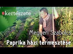 Paprika házi termesztése - Vízmegtartó bakhát építése - Capsicum annum - YouTube Mens Sunglasses, Youtube, Red Peppers, Men's Sunglasses, Youtubers, Youtube Movies