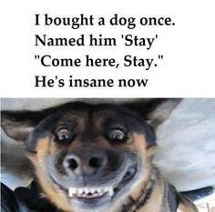 #DOG #HUMOR #bestever most pinned