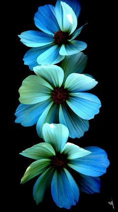 Flowers Nature, Exotic Flowers, Amazing Flowers, Pretty Flowers, Beautiful Images Of Flowers, Cosmos Flowers, Pictures Of Flowers, Beautiful Things, Wallpaper Nature Flowers