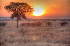 Wild Marula Tree and African Sunset  #Marula #Africa